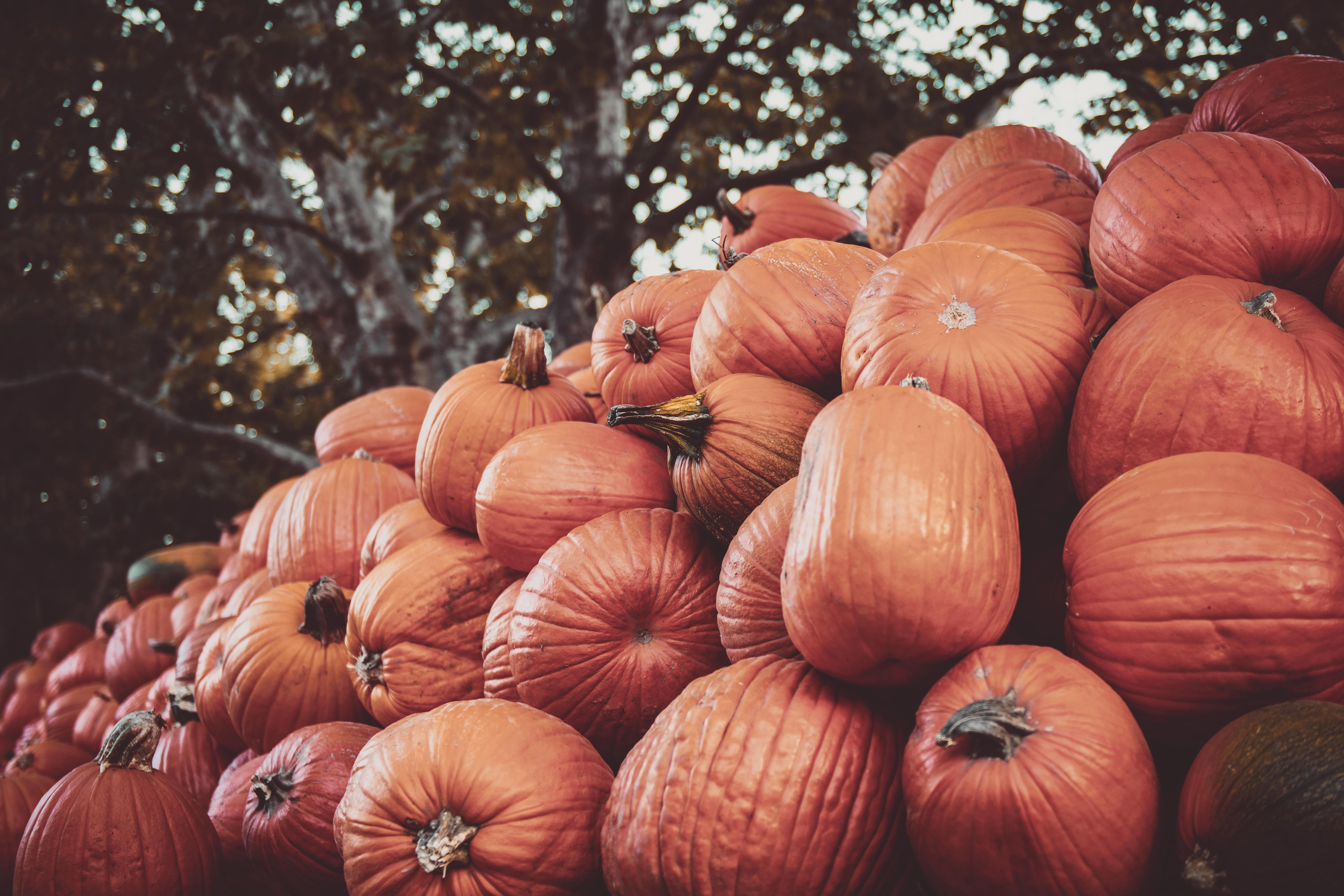 Halloween Pumpkin Carving Feature Image